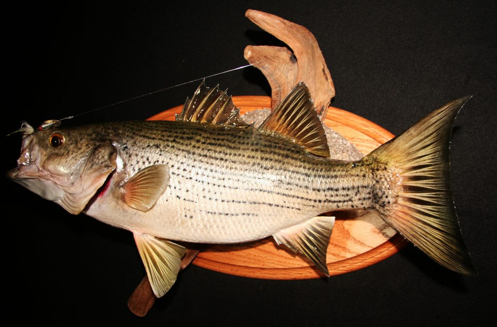 Hybrid Bass