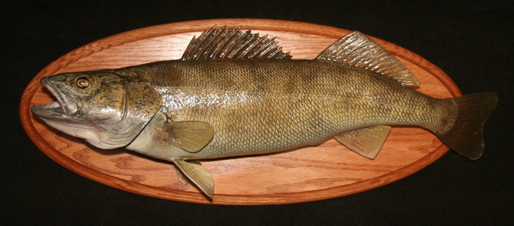 Walleye Reproduction