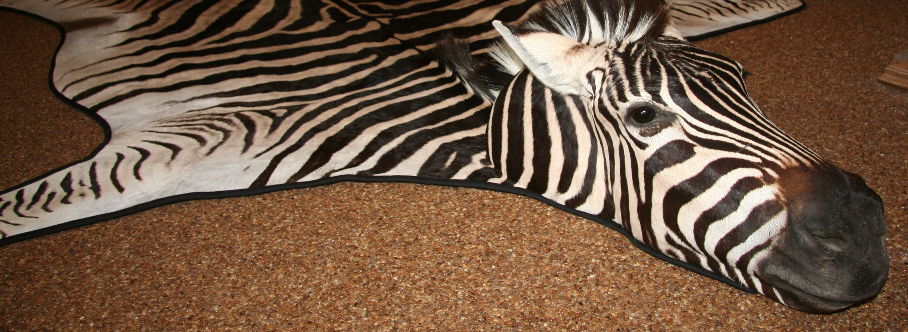 faux rug buy charming floor ivory and hide black interior living zebra fabulous decoration curtains design rugs room for